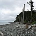 Tow Hill Haida Gwaii Bc by Barbara St Jean