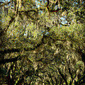 Towering Canopy by Carla Parris