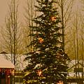 Town Tree by Bob Berwyn