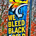 Towson Tigers Black And Gold by Stephen Younts