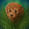 Toy Poodle Puppy by Michael Conley