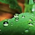 Traces Of Rain by Patti Whitten