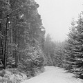 Track, Winter, Slaley Woods by Iain Duncan