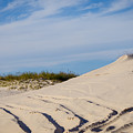 Tracks In The Sand Dunes by Debra Martz