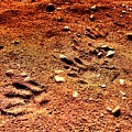 Tracks On Mars by Scott D Van Osdol