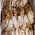 Traditional Sun Dried Squid In Kep Market Cambodia by Jacek Malipan