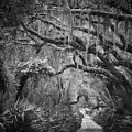 Trail At Cumberland Island by Stanton Tubb