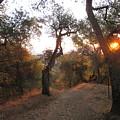 Trail At Sunrise by Suzanne Leonard