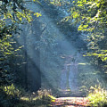 Trail In Morning Light by Heiko Koehrer-Wagner