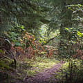 Trail In The Forest by Robert Potts