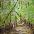 Trail In Woods by Diana Prout