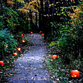 Trail Of 100 Jack-o-lanterns by Steve Karol