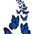 Trail Of The Blue Butterflies Transparent Background by Barbara St Jean