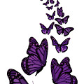 Trail Of The Purple Butterflies Transparent Background by Barbara St Jean