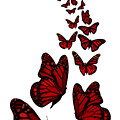Trail Of The Red Butterflies Transparent Background  by Barbara St Jean