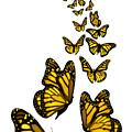 Trail Of The Yellow Butterflies Transparent Background by Barbara St Jean