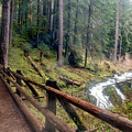 Trail Over Sol Duc Falls Bridge In Olympic National Park by Brandon Alms
