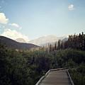 Trail Ridge Road by Sue Collura