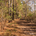 Trail Through The Pines At Waccamaw River Park by MM Anderson