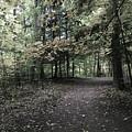 Trail Walking  by Jessica Olney