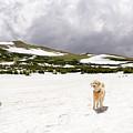 Traildog At Kingston Peak Snow Field by Cary Leppert