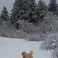 Traildog Loving The Winter Scene In The Flatirons by Cary Leppert