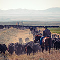 Trailing The Herd by Todd Klassy