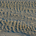 Trails In The Sand by Larry Palmer