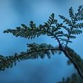 Trailside Foliage by Brian Redgrave