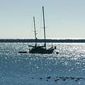Tranquil Bay by Carol Groenen