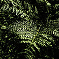 Tranquil Botanical Ferns by Jorgo Photography - Wall Art Gallery
