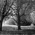 Tranquil Landscape Black And White by Sue Harper