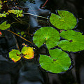 Tranquil Pond by Harry Spitz