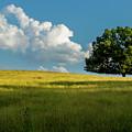 Tranquil Solitude Billowing Clouds Oak Tree Field Art by Reid Callaway