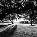 Tranquility Amongst The Oaks by Scott Pellegrin