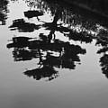 Tranquility II by John Hansen