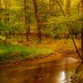 Tranquility Stream - Allaire State Park by Angie Tirado
