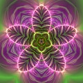 Transition Flower by Robert Thalmeier