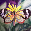 Transparent Butterfly by Irina Sztukowski