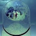Trapped Under Glass by Jenny Revitz Soper