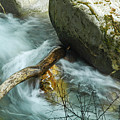 Trapped River Log by George E Richards
