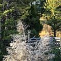 Travertine Tree by Ann Boulais