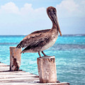 Treasure Coast Pelican Pier Seascape C1 by Ricardos Creations