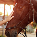 Treating From Depression With The Help Of A Horse by Jan Pavlovski