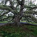 Treaty Oak 12 14 2015 028 by Chuck Walla