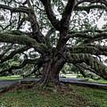 Treaty Oak 12 14 2015 029 by Chuck Walla