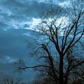 Tree # 23 by James L Bartlett