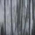 Tree #04 by Hans Janssen