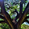 Tree 105 by Kristalin Davis