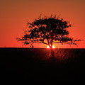 Tree A Glow by The Bohemian Lens LLC